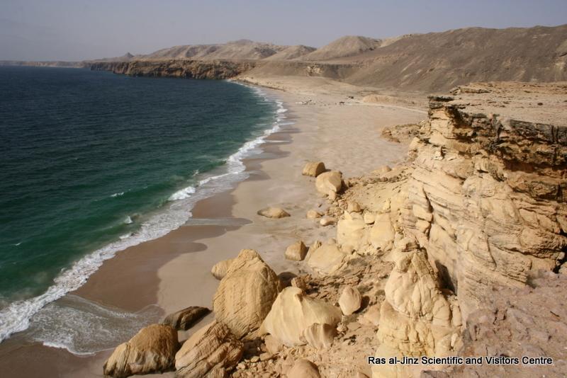 Ras al-Jinz Beach (21)