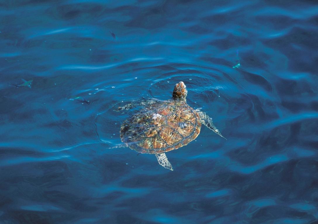 turtles 098