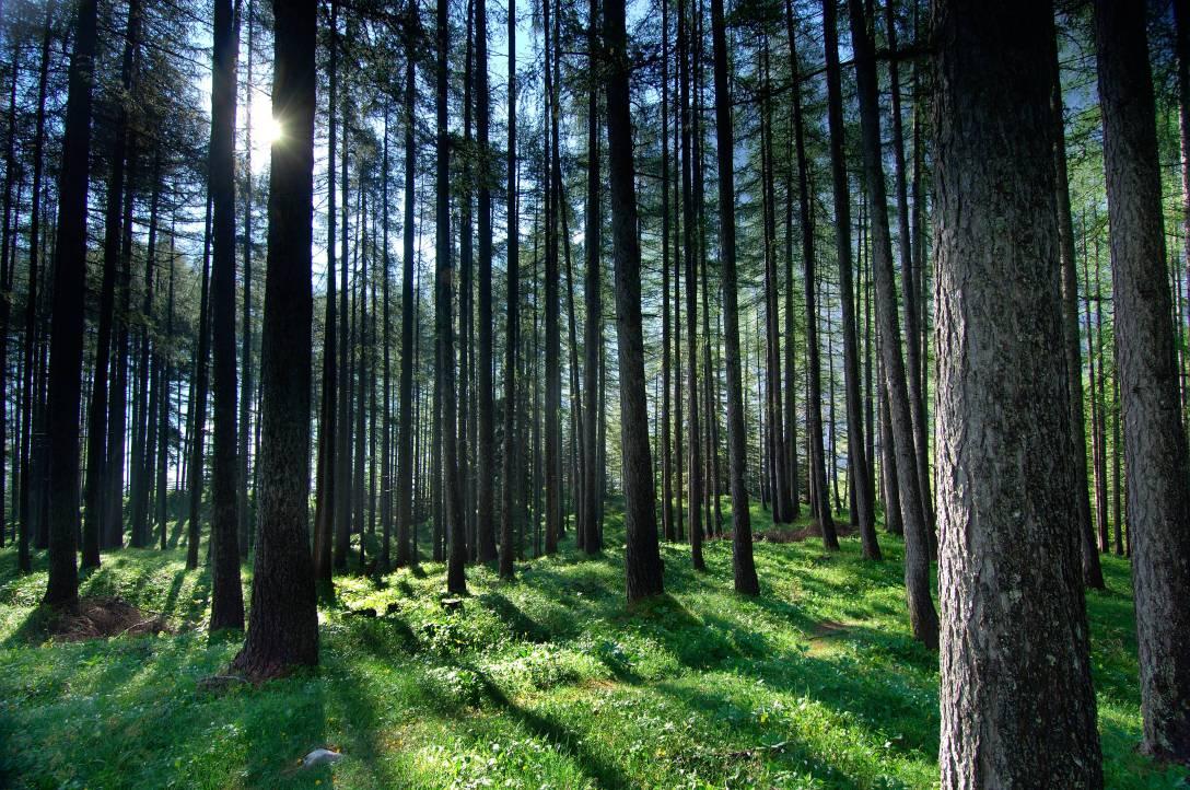 Slovene woods