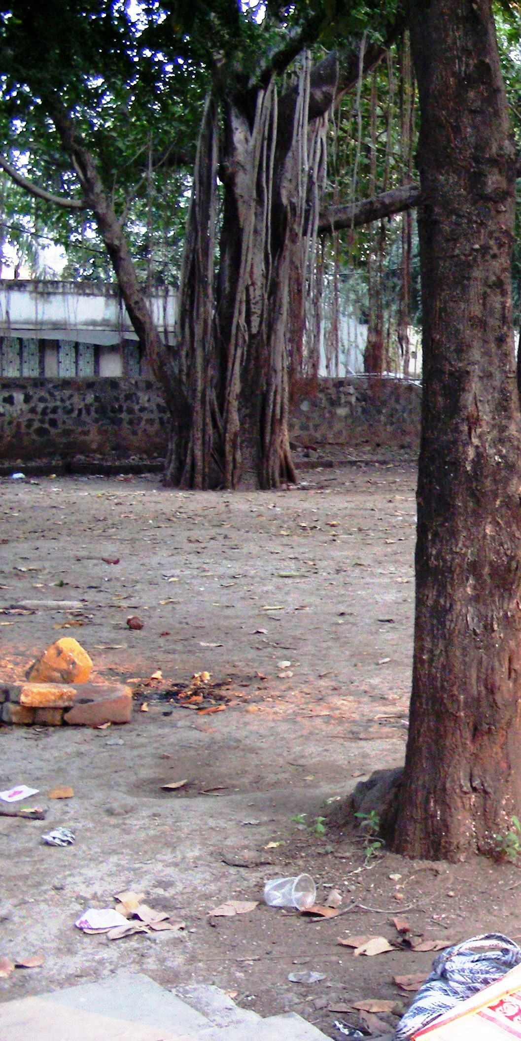 Many such Banyan trees have witnessed the passage of time at the ancient Shiv temple in Telankhedi, Nagpur